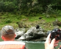 Rogue-River-Black-Bear-from-in-boat